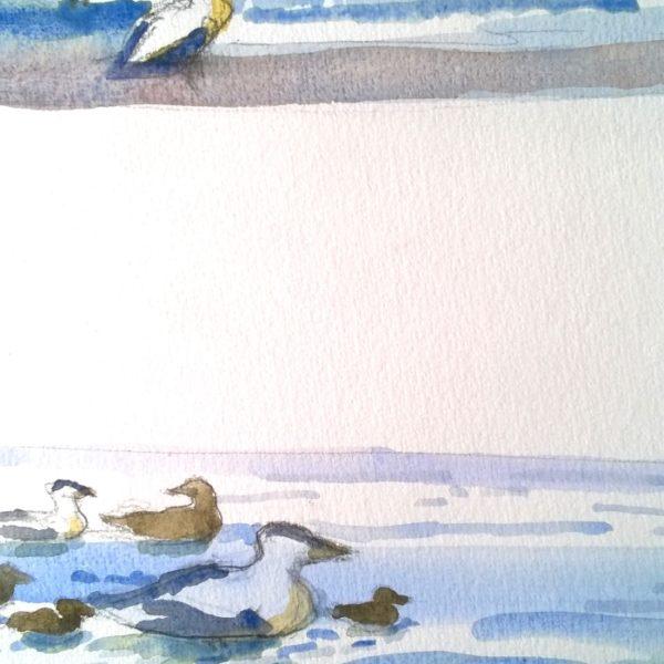 fugle i vandkanten 2