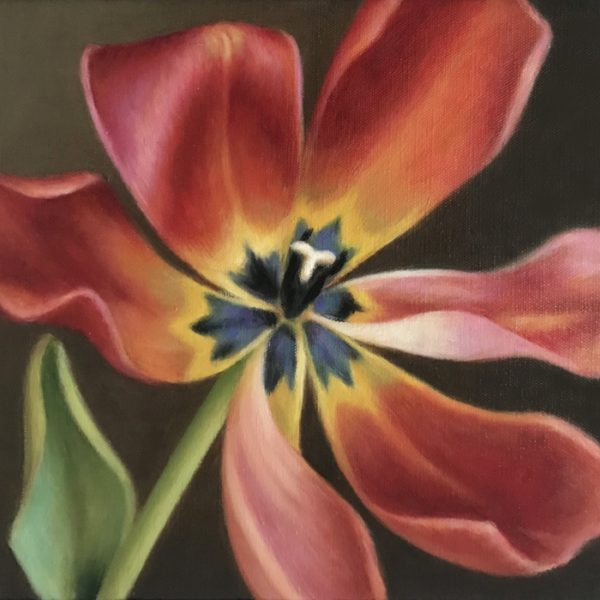 AabenRoedTulipan_30x34_s kr. 5.400