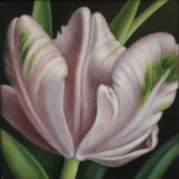 Tulipa Libretto Parrot 30x30 kr. 5.200