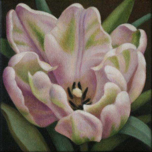 Tulipa Libretto Parrot - open 30x30 kr. 5.200