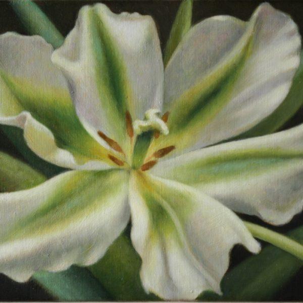 Tulipa Spring Green 30x40 kr. 5.600