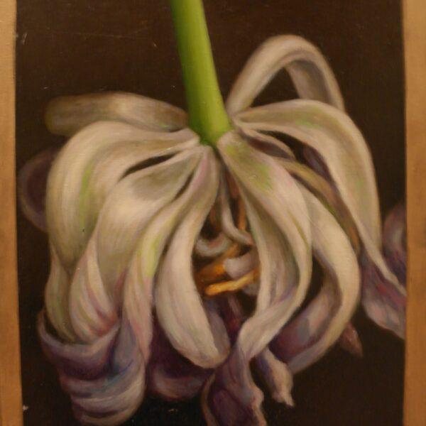 Falden tulipan