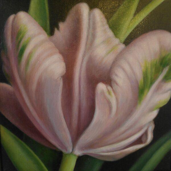 Tulipa Libretto parrot II